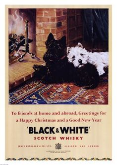 Black and White Scotch Whiskey ~ Fine-Art Print - Scottish Terrier Art Prints and Posters - Dogs and Puppies Pictures