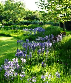 Angela Collins Garden Design use classic architectural shapes within romantic planting, especially in large country gardens.