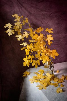 http://pixels.com/products/yellow-leaves-on-purple-nikolay-panov-art-print.html Floral still life photography with bouquet of tree branches with yellow leaves on tabletop covered by white drapery on purple background in interior design in autumn