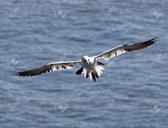Bilderesultat for seagull head on