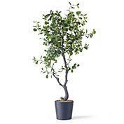 Grand Ficus Tree Bouquets, gorgeous flower arrangements, beautiful floral centerpieces for home decor Gumps