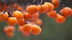 Vysaďte ho v správnom termíne Fruit, Garden, The Fruit, Garten, Lawn And Garden, Outdoor, Tuin, Gardens, Yard