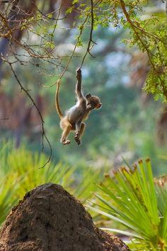 Baby baboon having some fun