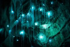 Glow Worms Turn New Zealand Cave Into Starry Night. By Shaun Jeffers Glow Worm Cave, Maori Legends, Moving To New Zealand, Limestone Caves, Underground Caves, Lights Fantastic, Flash Photography, Creative Photography, Grid Design
