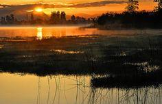 Sunrise, Fern Ridge Oregon by Falling Art, via Flickr