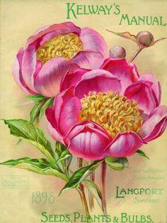 Seeds Plants & Bulbs - 50x70cm