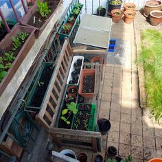 We're about vegetable growing in a small urban garden within a large modern city. The aim is to get maximum plant growth out of minimal available space.