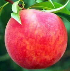 $22.99 Starking® Delicious™ Peach
