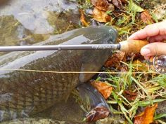 Carp on Extreme Pen Fly Rod Combo by Penfishingrods.com Pen Fishing Rod, Fishing Rods And Reels, Rod And Reel, Fishing Life, Fly Rods, Small World, Carp, Camping, Usa