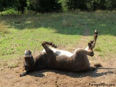 Let's roll! A baker's dozen dose of seven donkey cute — Farmgirl Fare