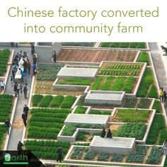 "City dwellers everywhere are reconnecting with food. In Shenzhen, China a former factory is now a blossoming urban farm, providing local food and a sense of community. The ""factory farm"" could become a model for similar initiatives throughout China.  http://inhabitat.com/green-value-farm-flourishes-within-former-chinese-factory/"
