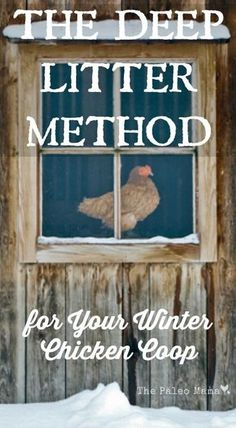 Using the deep litter method for your winter chicken coop is a great way to keep your chickens healthy and warm during the cold months. http://thepaleomama.com/2015/10/the-deep-litter-method-for-your-winter-chicken-coop/: