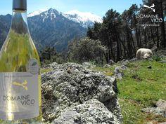 Vin blanc Corse Domaine Vico  Centre di Corsica - Montagna