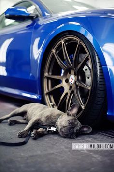 HRE Wheels and a wonderful puppy☺️