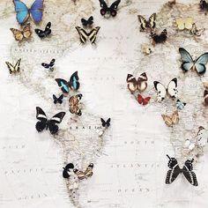 160710 - De wereld in huis - I believe I can fly - Bron Pinterest (unknown).jpg