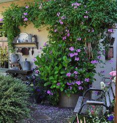 garden design - I heart my clematis! by noweeds Home & Garden Ideas Small Backyard Gardens, Backyard Garden Design, Modern Backyard, Balcony Garden, Small Gardens, Backyard Landscaping, Outdoor Gardens, Balcony Ideas, Garden Path