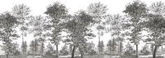 Paysages gravures - Les Acacias grisaille 700x250cm - Ultra mat - 7 lés de 100cm
