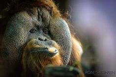 Ron Martinsen's Photography Blog: 5D Mark III and 300mm f/2.8L IS II USM at the Zoo