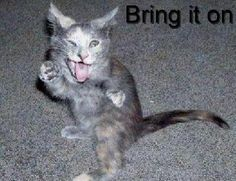 funny animals with quotes   Funny_Animals_with_Sayings_Funny%20Animals,%20Cats.jpg