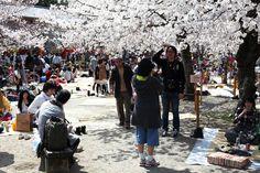 Photos of the Hanami in Kyoto. Maruyama park.