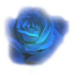 TUBE rose bleu