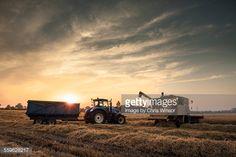 Stockfoto : Evening harvest