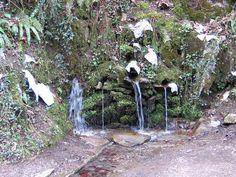 San Juan Xar San Juan Xar es un santuario y Reserva Natural ademas del único bosque autóctono de Carpe (Carpinus betilus) de toda la Península Ibérica. Los carpes, también llamados abedulillos, hacen de este bosque una joya de la naturaleza de Navarra. Este mágico lugar tiene en el mismo centro del bosque una cueva y ermita así como una fuente de la que dicen su agua es milagrosa.