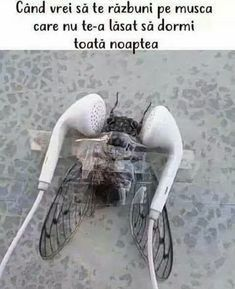 Cicada keeping me awake at night. Well guess what motherfucker, it's Baby Shark on 12 hour loop - iFunny :) Very Funny Images, Funny Pictures Images, Really Funny Pictures, Funny Photos, Funny Baby Memes, Funny Video Memes, Funny Pins, Funny Babies, Funny Jokes