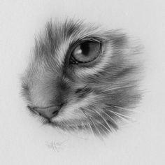 Drawings by Darrel Tank - Drawing Studies Realistic Animal Drawings, Pencil Art Drawings, Drawing Sketches, Drawing Animals, Drawing Ideas, Horse Drawings, Sketching, Cat Tattoo Designs, Kitty Tattoos