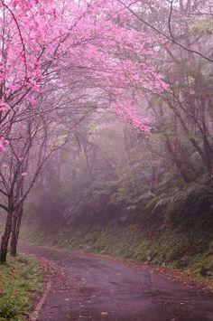 CherryBlossomLane  Kyoto, Japan