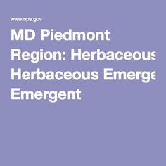 MD Piedmont Region: Herbaceous Emergent Howard County Md, Piedmont Region, Native Plants, Landscape Design, Gardening, Landscape Designs, Garten, Lawn And Garden, Garden