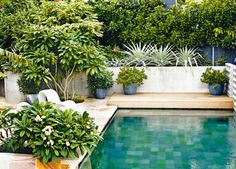 A swimming pool is one of the favorite places to refresh our mind. It is no wonder that people will seek the resort with modern and luxurious swimming pool to spend their vacation. A nice swimming pool design will require . Kleiner Pool Design, Pool Plants, Plants Around Pool, Potted Plants, Piscina Interior, Moderne Pools, Small Pool Design, Backyard Pool Landscaping, Terraced Backyard