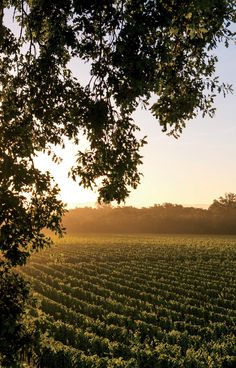 Why California Wine Country Is Better Than Ever - Condé Nast Traveler