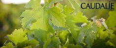 Colección Vino de Caudalie