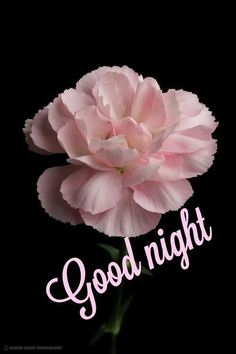 Good Night Greetings, Good Night Wishes, Good Night Sweet Dreams, Good Night Image, Good Night Quotes, Good Morning Good Night, Sweet Dreams Pictures, Morning Quotes Images, Good Morning Flowers