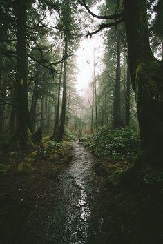 Rain in a dark forest