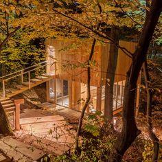 Treehouses képek, Noszvaj szállás képek, lombházak képek, extrém szállás képek Hungary, Glamping, Perfect Place, Marvel, Leaves, Cabin, House Styles, Holiday, Plants