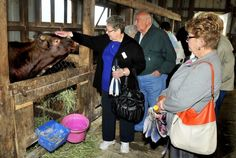 Maine dairy farmer bullish on agritourism - The Portland Press Herald / Maine Sunday Telegram