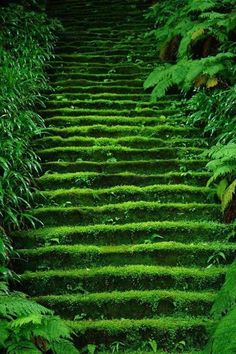 Moss in temple stairs 鎌倉妙法寺 Myoho-ji Temple, Kamakura, Japan Kamakura, Beautiful World, Beautiful Places, Beautiful Scenery, Beautiful Beautiful, Wonderful Places, Japan Photo, Stairway To Heaven, Color Of Life