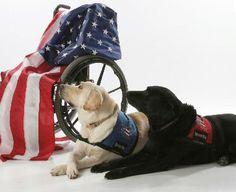 Cadeirantes em Foco: USA wheelchair