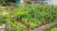 Community garden love!