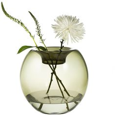 Niche Modern Stamen Glass Vase ($550) ❤ liked on Polyvore featuring home, home decor, vases, flowers, decor, plants, niche smoke, glass vase, glass home decor and niche modern