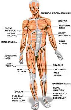 definiția subțire a corpului