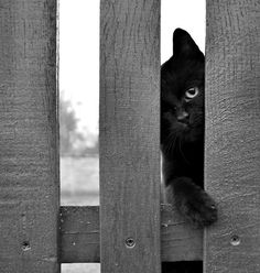 ✄...Black cats are my favorite. Its a shame others can't see them that way....✄