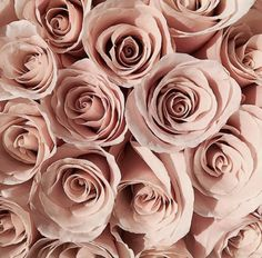 Pinterest: @m4ddymarie Pink And White Flowers, Pink Roses, Beautiful Flowers, Unique Wallpaper, Rose Wallpaper, Photo Rose, Bloom Baby, Floral Artwork, Floral Photography
