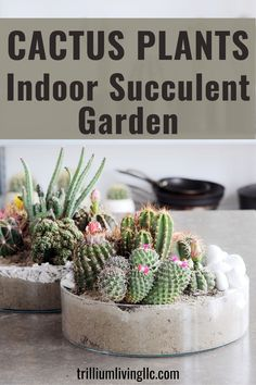 Cactus plants and succulents make a beautiful indoor garden. We show you how with a few easy steps. Also tricks to avoid getting pricked by the cacti spines! A video tutorial is included! #cactus #indoorplants #trilliumliving