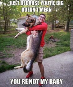 22 Images Dog Owners Can Relate To - Animals & Nature Gallery Best Big Dogs, I Love Dogs, Cute Dogs, Funny Dogs, Funny Animals, Cute Animals, German Shepherd Puppies, German Shepherds, Dog Memes