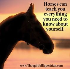 Horses can teach you everything