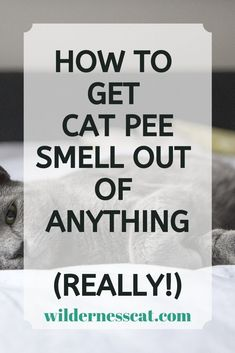 Best Cat Urine Carpet Cleaner: How to Get Rid of the Cat Pee Smell Remove Cat Urine Smell, Cat Pee Smell, Cat Urine Smells, Cleaning Pet Urine, Cat Care Tips, Pet Tips, Pet Care, Urine Cleaner, Cat Urine Remover