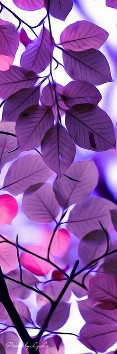 #nature #purple #white